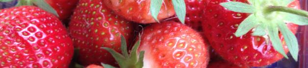 Elsanta variety of strawberries