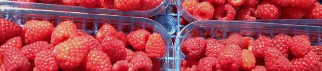 Late variety raspberry Tadmore