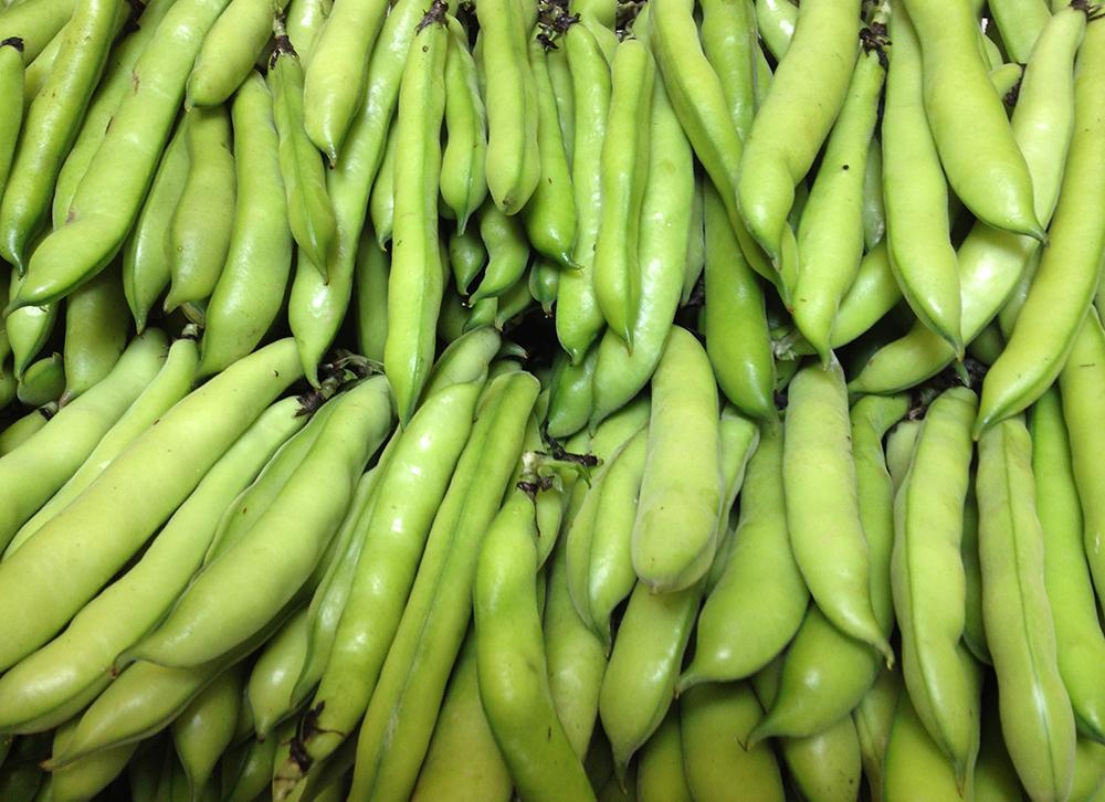 Freshly picked broad beans