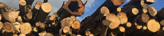 Firewood logs delivered and stacked