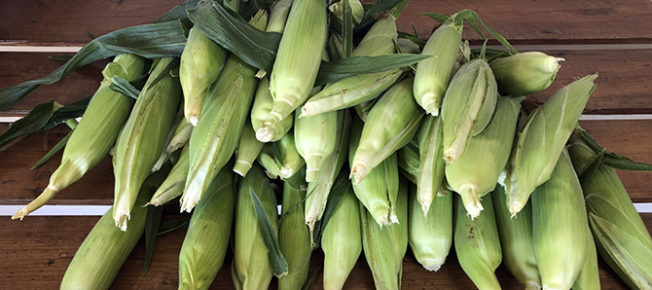 Freshly picked sweetcorn